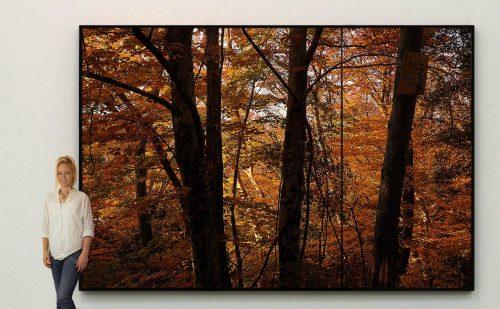 """New """"Woods Interiors"""" series"""