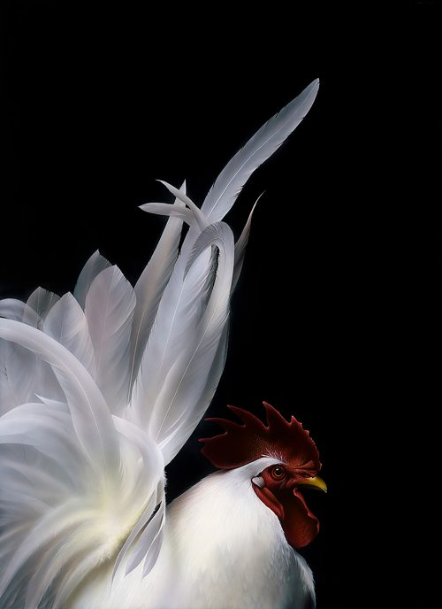 Glowing White
