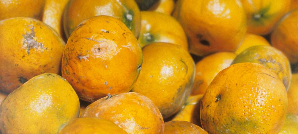 Honey Tangerines - Ben Schonzeit